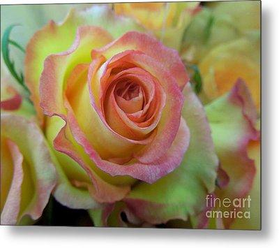A Perfect Rose Metal Print by Renee Trenholm