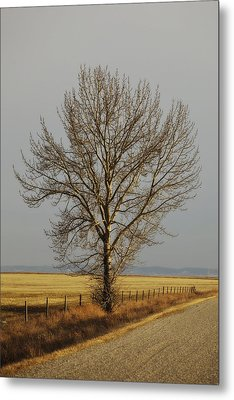 A Poplar Tree By The Side Of A Gravel Metal Print by Roberta Murray