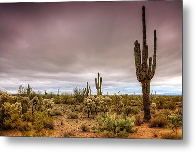 A Rainy Morning  Metal Print by Saija  Lehtonen