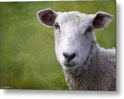A Sheep Metal Print by David Simons