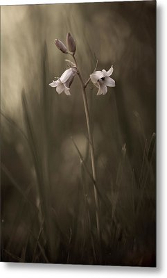 A Small Flower On The Ground Metal Print