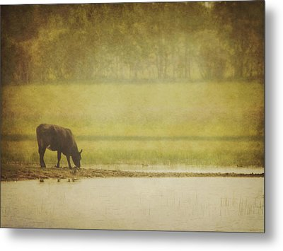 A Steer At A Pond Having A Drink In Red Metal Print by Roberta Murray