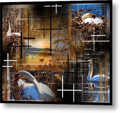 A Swans Mysterious World Metal Print by Andrew Sliwinski