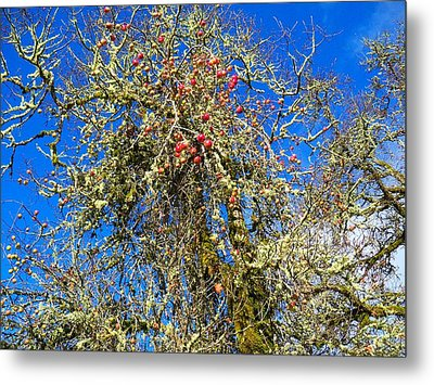 A Tangle Of Apple And Oak Metal Print by Steve Battle