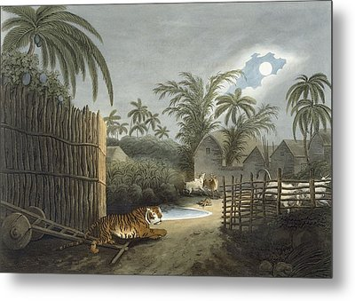 A Tiger Prowling Through A Village Metal Print by Samuel Howett