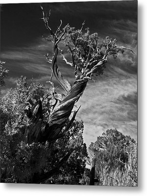 A Twisted Life  Metal Print