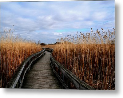 A Walk Through The Phragmites Metal Print by Larry Trupp