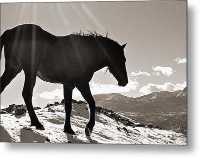 A Wild Horse In The Mountains Metal Print by Lula Adams
