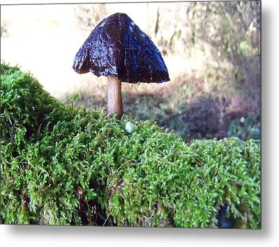A Winter Mushroom Metal Print by Steve Battle