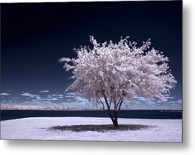 A Winter Summer Metal Print