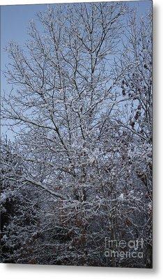 A Winter's Day Metal Print