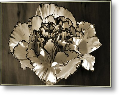 Abstract Carnation Metal Print by Terence Davis