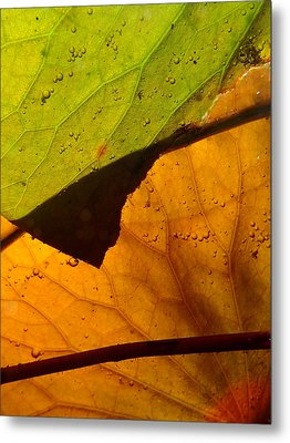 Metal Print featuring the photograph Abstract Lillypad by Lorella  Schoales