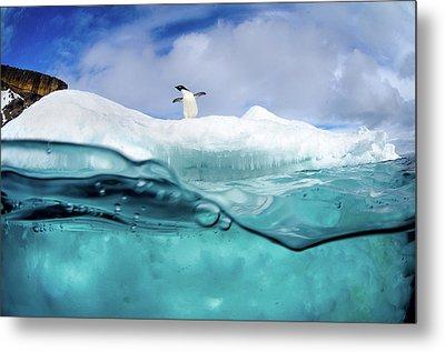 Adelie Penguin On Iceberg Metal Print