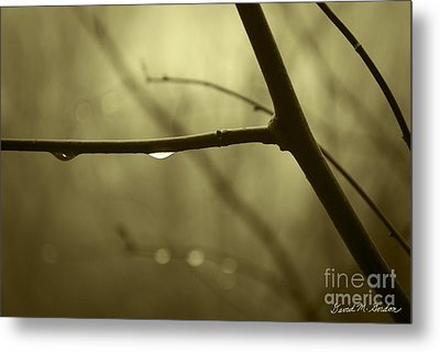 After It Rained Metal Print by David Gordon