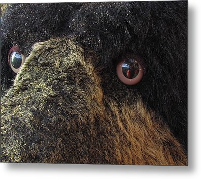 Metal Print featuring the photograph Alaskan Bear by Jennifer Wheatley Wolf