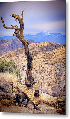 Alone In The Desert Metal Print by Mariola Bitner