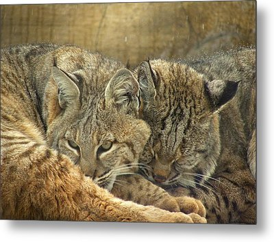 Always Watching Metal Print by Teresa Schomig