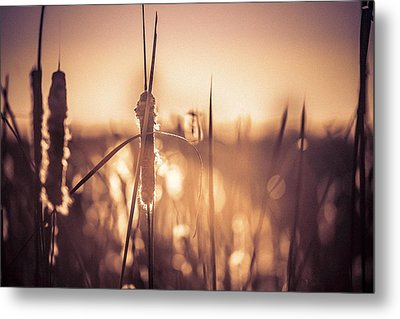 Metal Print featuring the photograph Amber Glow by Jason Naudi Photography