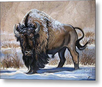 American Bison Winter Metal Print by Anne Shoemaker-Magdaleno