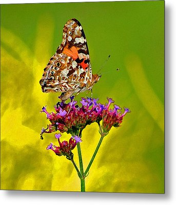 American Painted Lady Butterfly Metal Print by Karen Adams