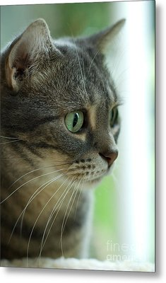 American Shorthair Cat Profile Metal Print by Amy Cicconi