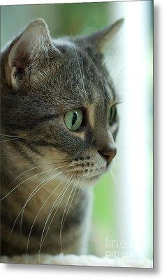 American Shorthair Cat Profile Metal Print