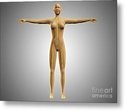 Anatomy Of Female Body With Nervous Metal Print