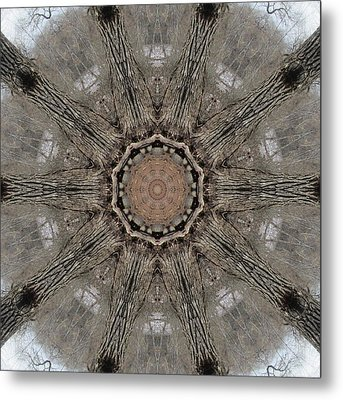 Ancient Cottonwood Metal Print by Trina Stephenson