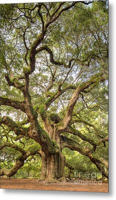Angel Oak Tree Johns Island Sc Metal Print by Dustin K Ryan
