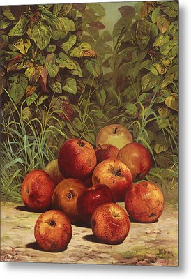 Apples Circa 1868 Metal Print by Aged Pixel