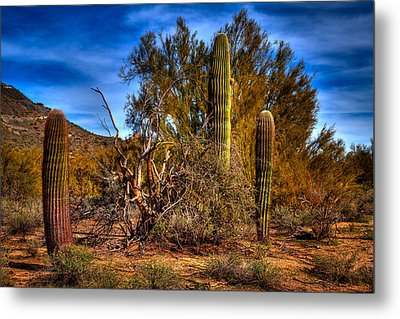 Arizona Landscape II Metal Print by David Patterson