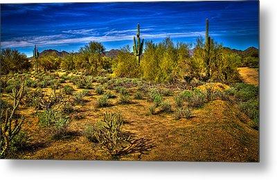 Arizona Landscape Iv Metal Print by David Patterson