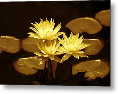 Artistic Gold Tone Water Lilies Metal Print by Linda Phelps