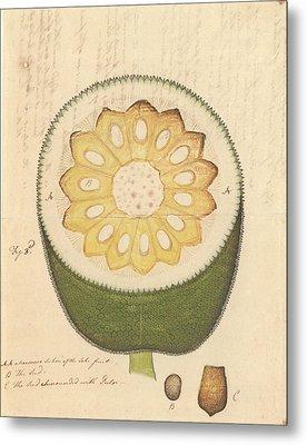 Artocarpus Heterophyllus Metal Print by Natural History Museum, London