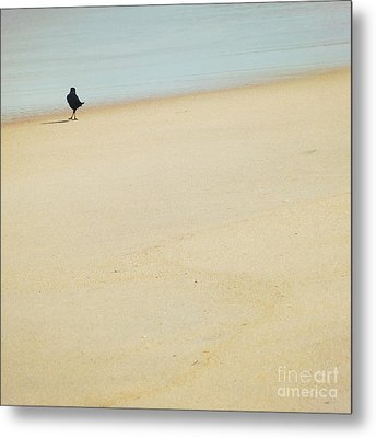As I Wander Metal Print by Sharon Coty