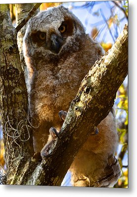 At The Top Metal Print by AnnaJo Vahle