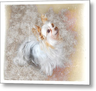 Attentive Metal Print by Mary Timman