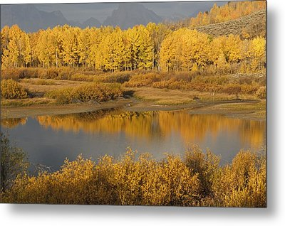 Autumn Foliage Surrounds A Pool In The Metal Print by David Ponton