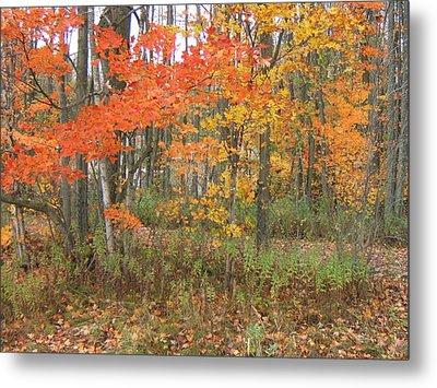 Autumn Golds Metal Print by Margaret McDermott