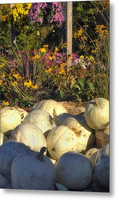 Autumn Gourds Metal Print by Joann Vitali