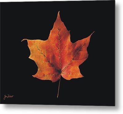 Autumn Maple Leaf 2 Metal Print