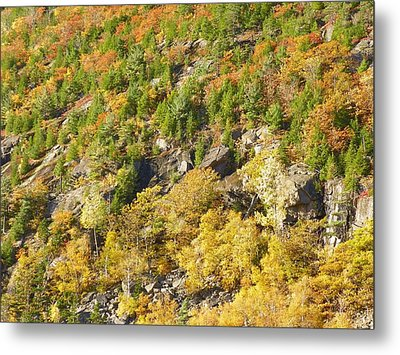Metal Print featuring the photograph Autumn Mountain Side by Gene Cyr