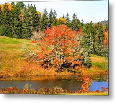 Metal Print featuring the photograph Autumn Orange by Gene Cyr