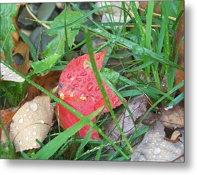 Autumn Raindrops Metal Print