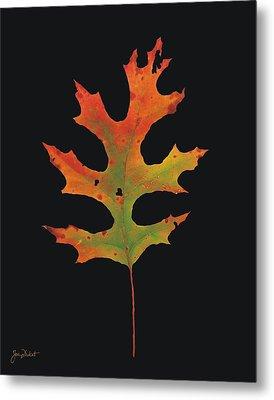 Autumn Scarlet Oak Leaf Metal Print