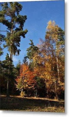 Autumn Scene Metal Print by Bogdan M Nicolae