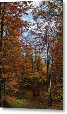 Autumn Scene II Metal Print by Bogdan M Nicolae
