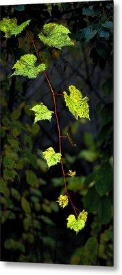 Autumn Vine Metal Print