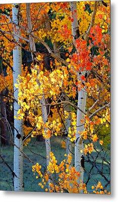 Autumn's Fire Metal Print by Jim Garrison